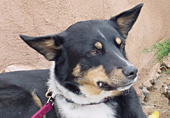 buddy-podium-dog1